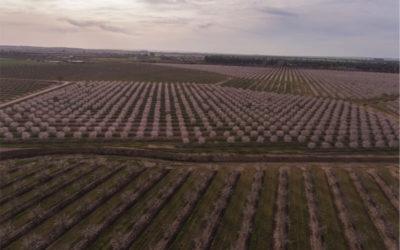 Borges Agricultural & Industrial Nuts al tancament del primer trimestre de 2019/20 ha incrementat la seva facturació en un 11,7%