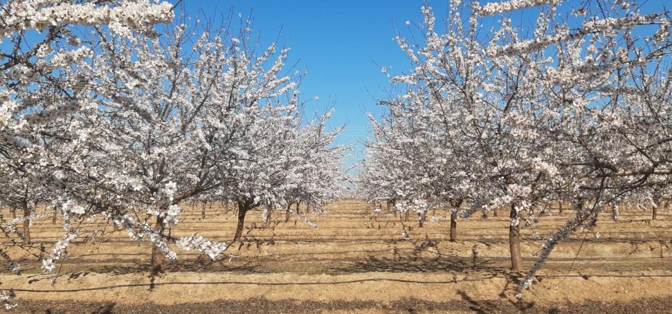 Borges Agricultural & Industrial Nuts obté un resultat d'1,5 milions d'euros al tancament del tercer trimestre