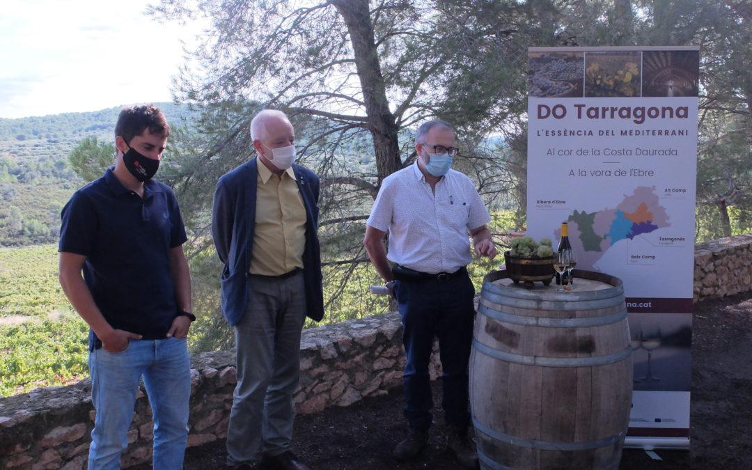 L'INCAVI estudia estratègies d'adaptació al canvi climàtic de la varietat Macabeu a la DO Tarragona