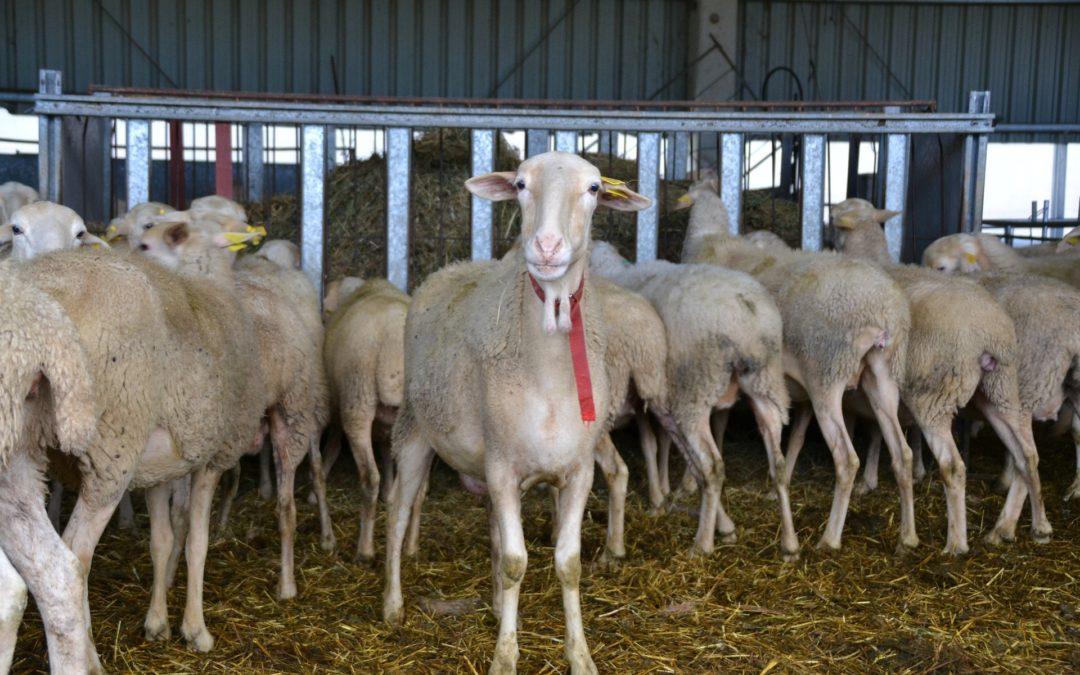 El sector carni-ramader de Catalunya demana compromisos ferms per part del nou Govern de la Generalitat